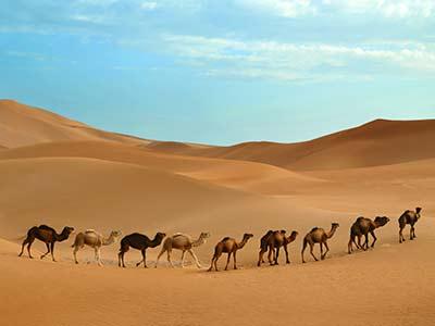 caravan-in-desert-P7R84VC